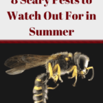 8 Scary Pests to Watch Out For in Summer