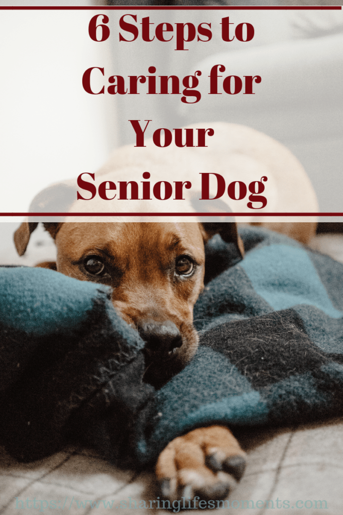 Caring for your aging dog can be difficult to come to terms with, but there are plenty of ways to get through it. Here are some tips to help with that.