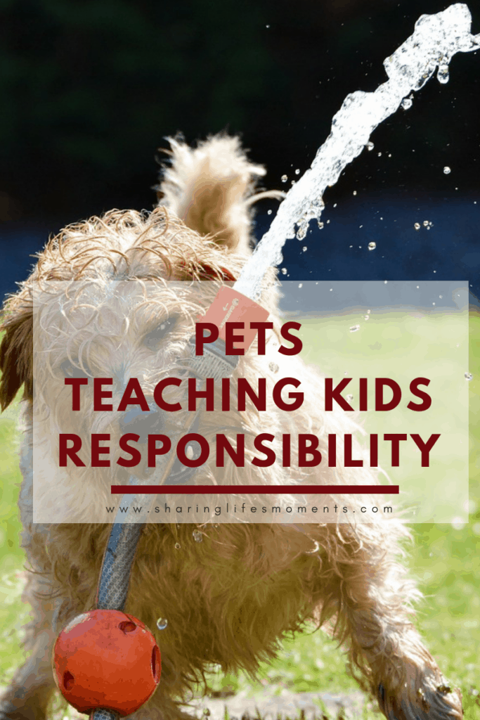 Deciding on getting a pet can be daunting for sure. Here are some ways pets teaching kids responsibility can happen. These tips will get you started.