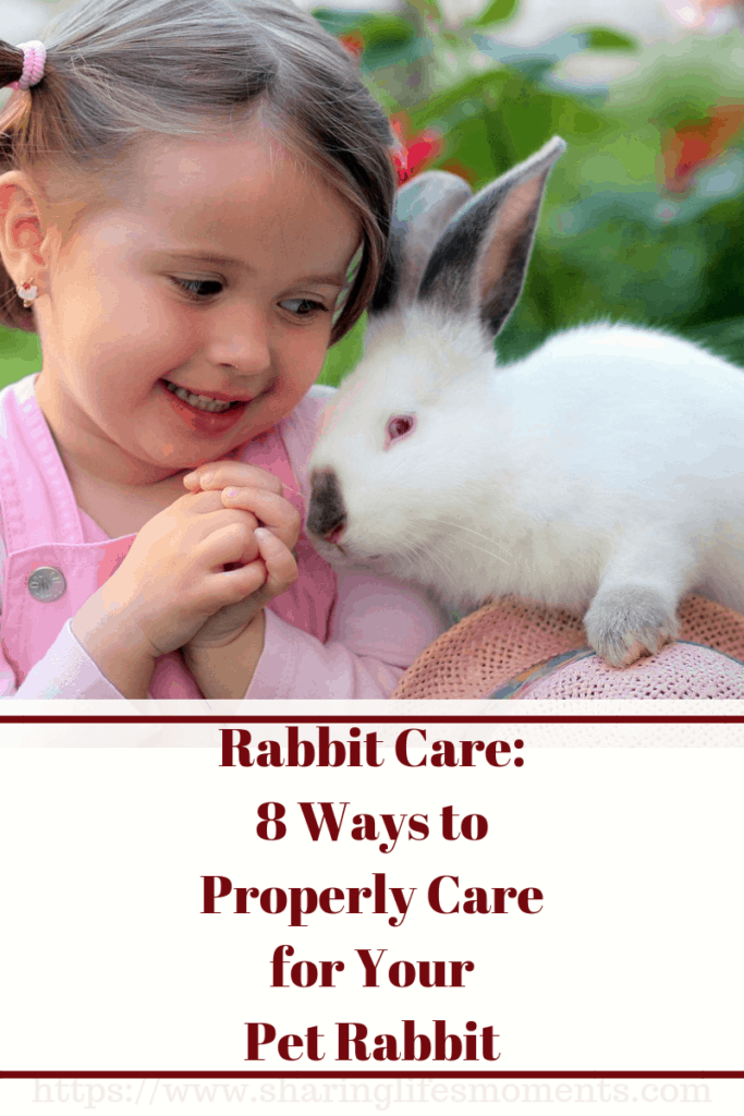 Has your family just welcomed a new rabbit? There's a lot you need to know about giving proper rabbit care, so read on to learn more.