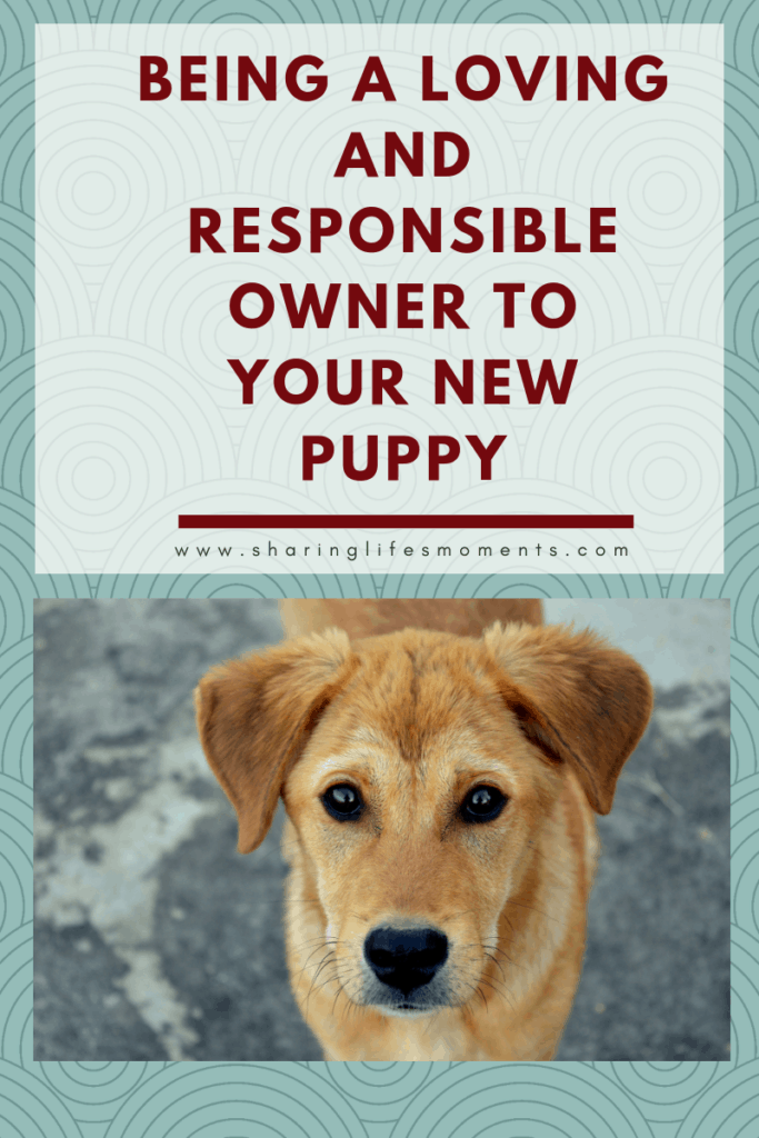 It's quite important that kids know how to the key to being a loving and responsible owner to your new puppy. These pieces of advice should help you!