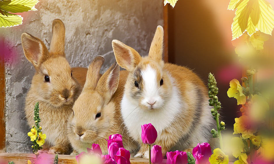 Rabbit Care: 8 Ways to Properly Care for Your Pet Rabbit 2