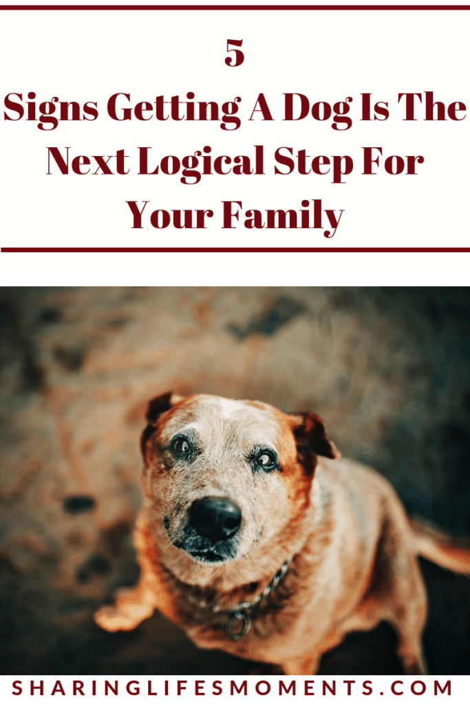 Sometimes it's hard to tell if getting a dog is the next logical step for your family. Here are five signs that your family is ready for having a canine family member.