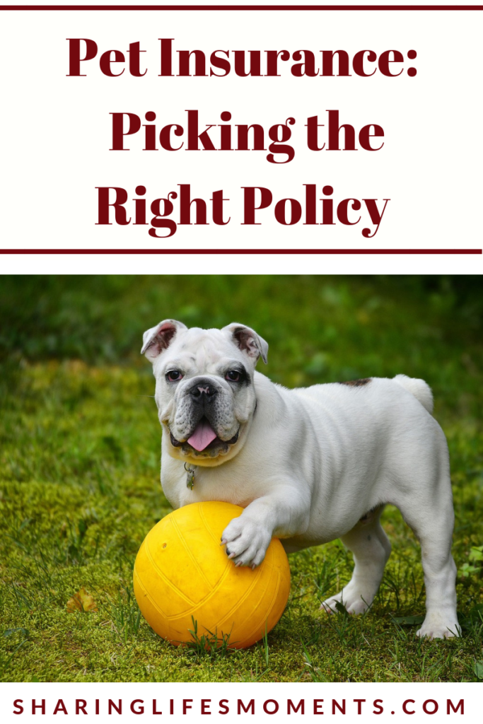 Picking out the right policy for your pet's insurance can be a bit tricky. Read these tips to know which pet insurance is right for you.