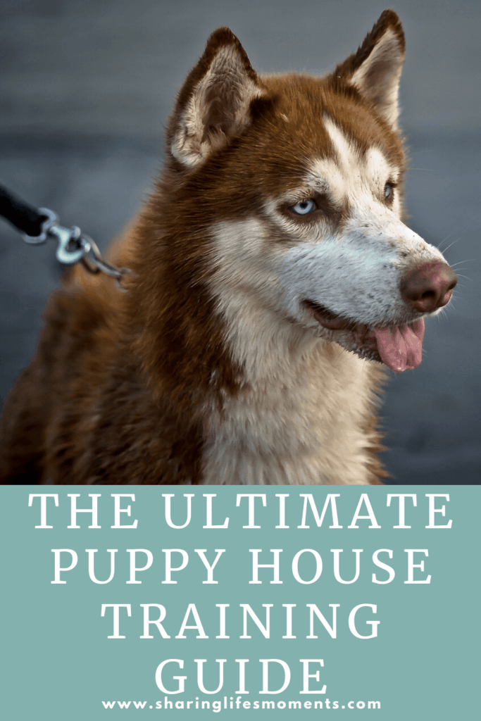 Puppy house training doesn't have to be an extremely difficult process. Nor does it have to take long. Read this guide to help you!
