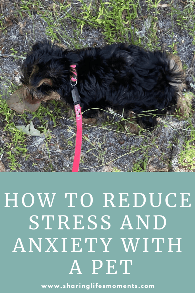 Owning a pet can seriously help you reduce stress and anxiety. Here are some ways on how to reduce stress and anxiety with a pet. #petparent #sharinglifesmoments #doggielove #pettips #healthyliving